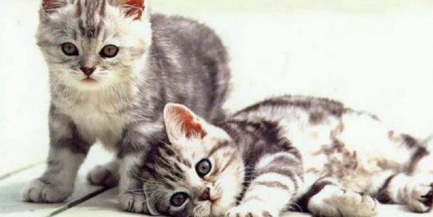 Zwei Kätzchen. Quelle: Screenshot YouTube