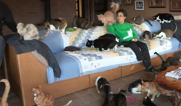 Viele Katzen. Quelle: YouTube Screenshot