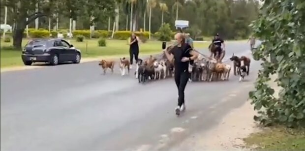 Ein Spaziergang mit vielen Hunden. Quelle: Screenshot YouTube