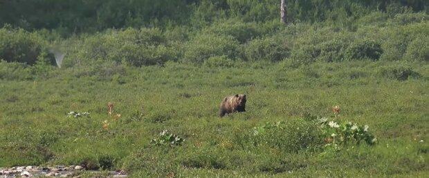 Bär. Quelle: Youtube Screenshot