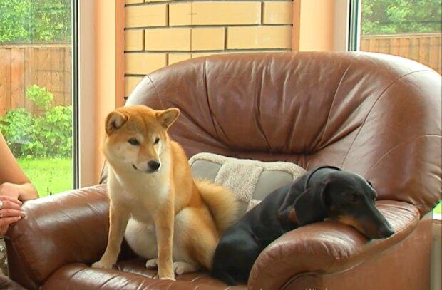 Hundefreundschaft. Quelle: zen.yandex.com