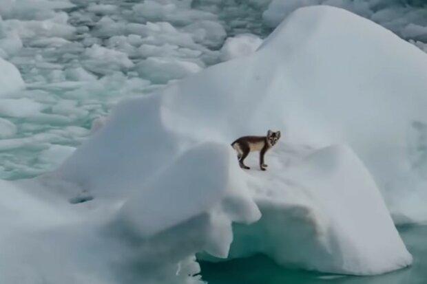 Das wilde Tier blieb nicht ohne Hilfe. Quelle: Screenshot YouTube