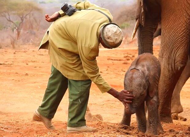 Die gerettete Elefantin brachte den Menschen das Wertvollste: ihr Baby