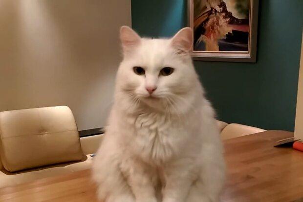 Weiße Katze. Quelle: Screenshot Youtube