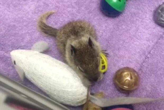 Baby-Eichhörnchen. Quelle: Screenshot Youtube