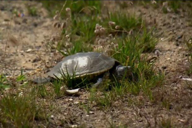Jedes Leben zählt: Ein Privatjet wurde gemietet, um seltene Schildkröten zu retten