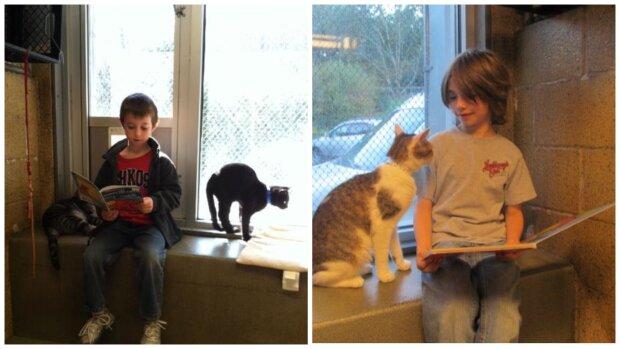 Katze und Kinder. Quelle:Screenshot