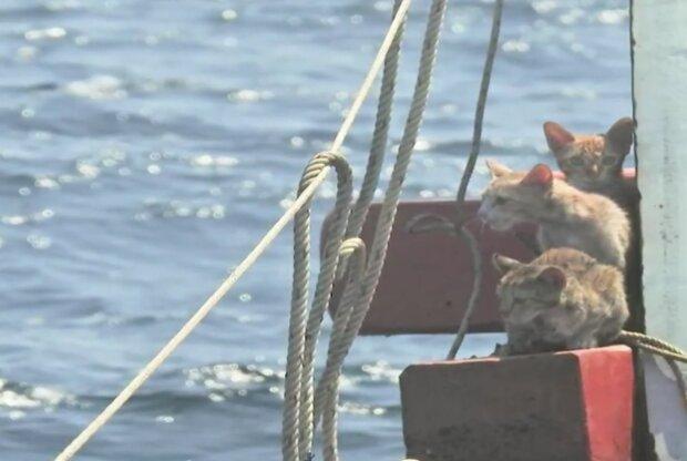 Kätzchen am Schiff. Quelle: Screenshot Youtube