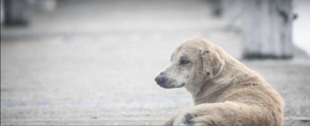 Streuender Hund. Quelle: Screenshot YouTube
