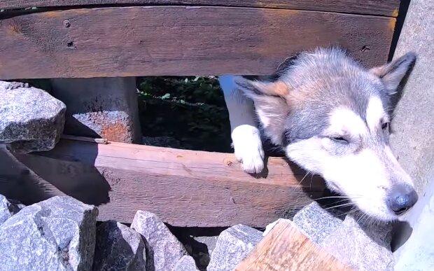 Ein Mann kletterte über Zaun, um einen Hund zu stehlen: Aber niemand beschuldigt ihn