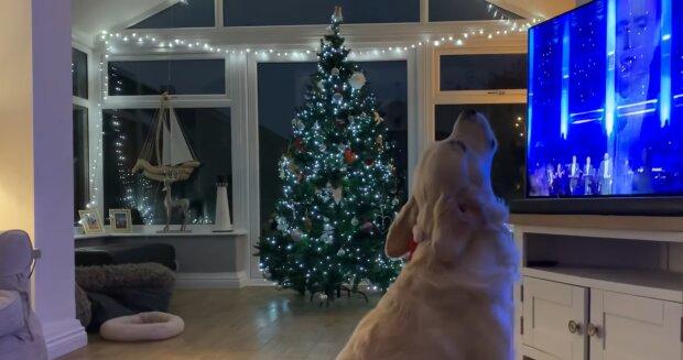 """""""Er hat den Text vergessen"""": Der Hund brachte das Publikum zum Lachen, indem er inspiriert zu Luciano Pavarotti sang"""
