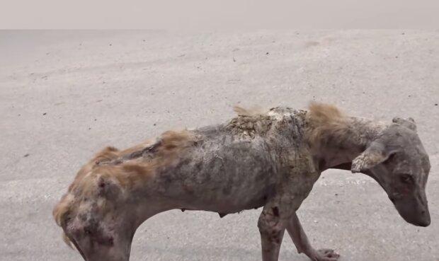 Unglücklicher Hund. Quelle: Screenshot YouTube