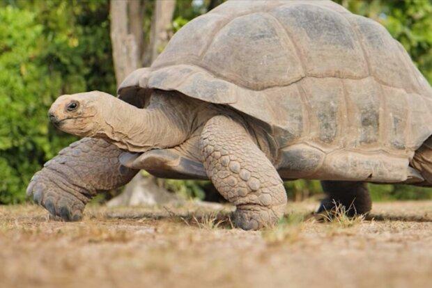 Ein Tier, das Jahrhunderte der Geschichte erlebt hat. Quelle: Screenshot YouTube