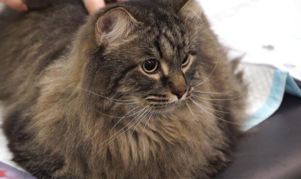 Die zweite Katze der Familie Fitzsaymons. Quelle: YouTube Screenshot