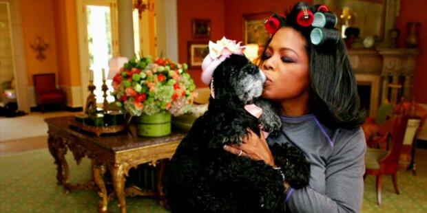 Begeisterte Hundeliebhaberin: Oprah Winfrey hat ihrem Testament eine Klausel hinzugefügt, nach der ihre Lieblingstiere 30 Millionen US-Dollar erhalten