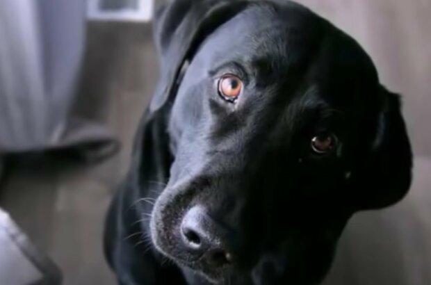 Geliebtes Haustier auf den ersten Blick. Quelle: Screenshot YouTube