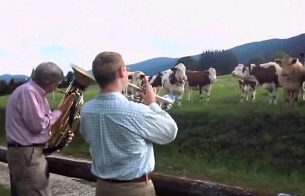 Musikalische Begleitung für vierbeinige Zuhörer. Quelle: Screenshot YouTube