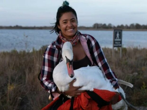 Die junge Frau mit einem guten Herzen hat einen schweren Weg zurückgelegt, um einen Schwan zu retten