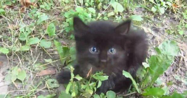 Schwarzes Kätzchen. Quelle:Screenshot YouTube