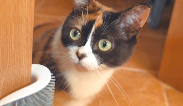 Schlaue Katze. Quelle: YouTube Screenshot