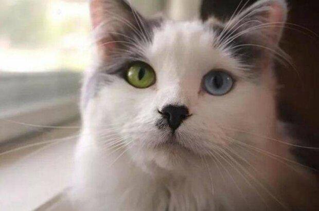 Ein junges Paar fand eine streunende Katze mit ungewöhnlichen Augen und brachte sie nach Hause
