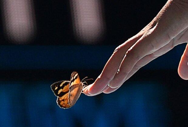 """""""Wie niedlich"""": Tennisspielerin brach ein Match ab, um einen Schmetterling zu retten"""
