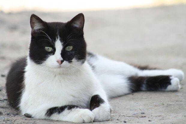 Die im Auto eingeschlossene Katze wurde gerettet: Der Besitzer suchte sie zu diesem Zeitpunkt anderweitig