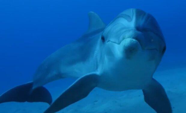 Delphin. Quelle: YouTube Screenshot