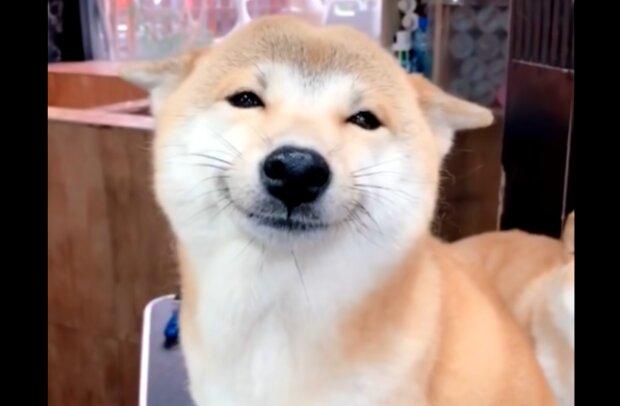 Hund namens Uni. Quelle: YouTube Screenshot
