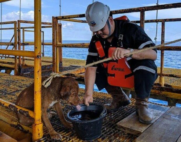 Der Hund war 220 Kilometer vom Ufer entfernt: Mitarbeiter eines Erdölbohrturms entdeckten das Tier rechtzeitig