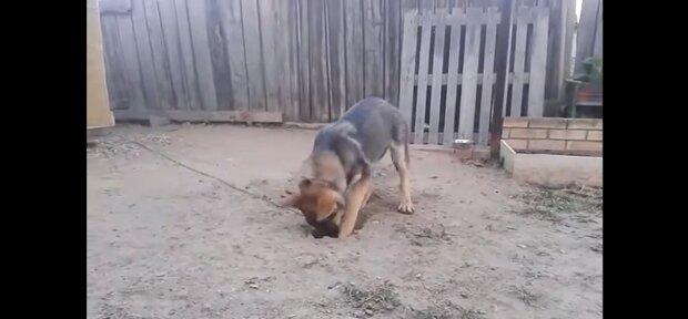 Schlauer Hund. Quelle: Youtube Screenshot