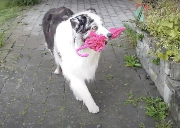 Hund mit dem Regenschirm. Quelle: Screenshot YouTube