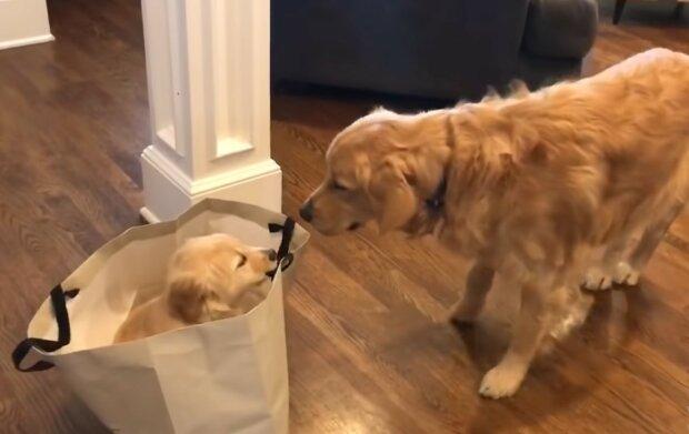 Der freundlichste Hund. Quelle: Screenshot YouTube