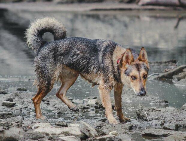 Er war der traurigste und ruhigste Hund im Tierheim, aber veränderte sich, als die neuen Besitzer kamen