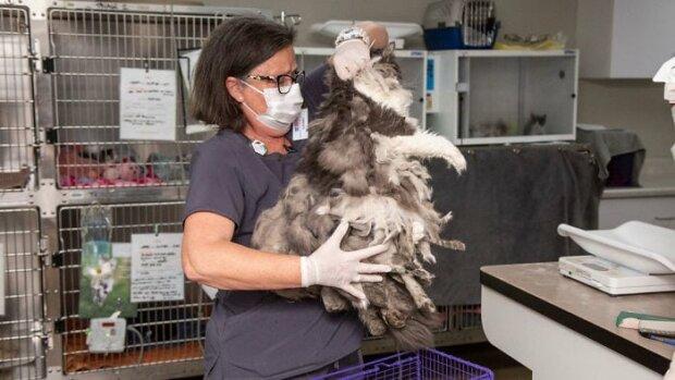 Zooschützer retteten ein zotteliges Fellmonster. Sie schnitten ein Kilogramm Fell und darunter eine charmante Katze