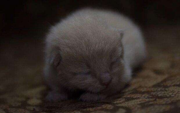 Winziges Kätzchen. Quelle: Screenshot Youtube