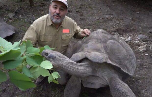 Schildkröte. Quelle: YouTube Screenshot