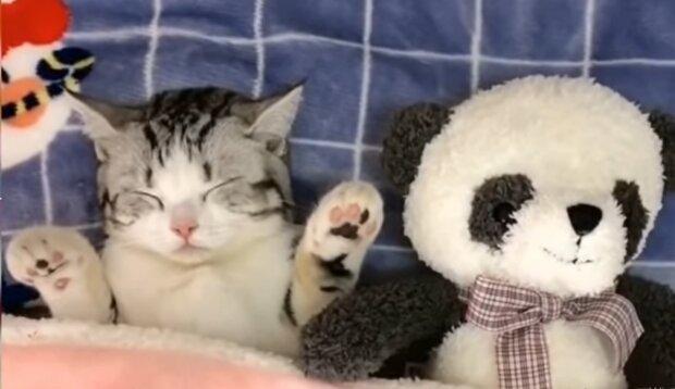 Haustiere und ihre Spielzeuge. Quelle: YouTube Screenshot