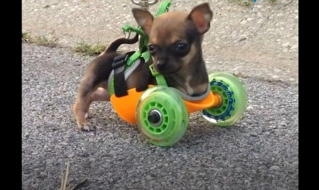 Besonderer Hund. Quelle: YouTube Screenshot
