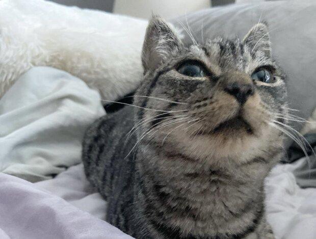 Katze. Quelle: Instagram.com