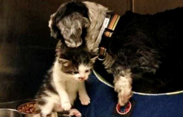 Hündin-Mutter und Kätzchen. Quelle: Screenshot YouTube