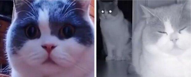 Der Besitzer ging und rief seine Katze täglich per Video an