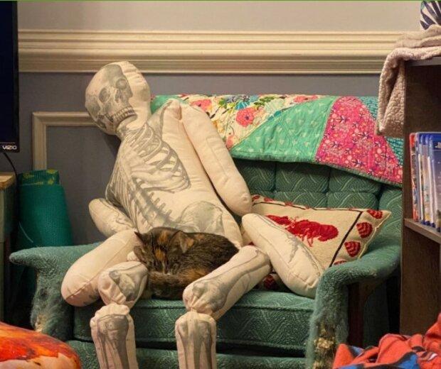 Eine Katze verwechselt ein riesiges Kissen mit einem Menschen und verbringt die ganze Zeit mit ihm