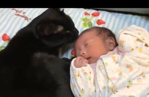 Katze und Baby. Quelle: Screenshot Youtube