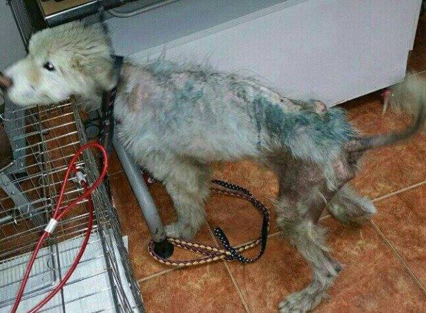 Ein Passant nahm einem Mann den felllosen Hund und schenkte dem Tier ein neues Leben