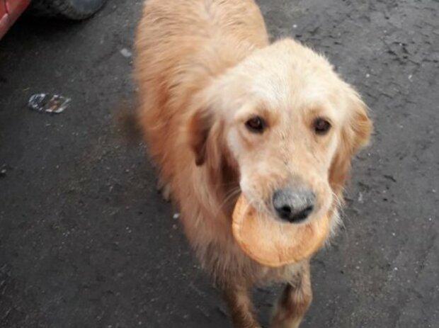 Der Hund mit einem trockenen Brötchen im Maul ließ niemanden gleichgültig