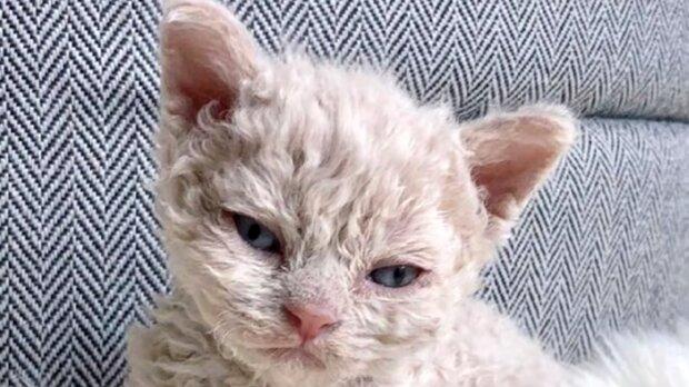Das Kätzchen. Quelle: Screenshot YouTube