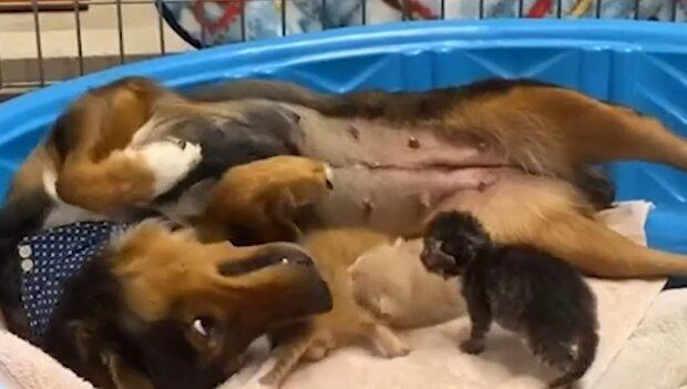 Georgia mit den Kätzchen. Quelle: YouTube Screenshot