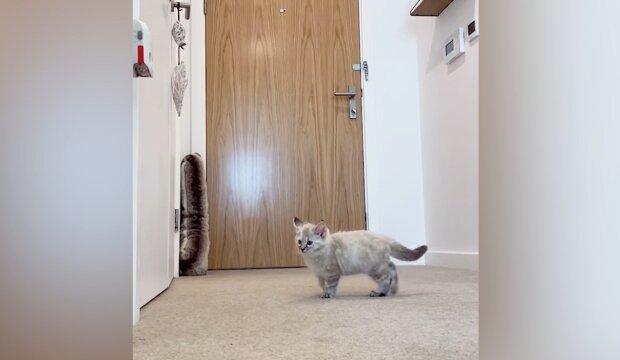 Kätzchen. Quelle: YouTube Screenshot