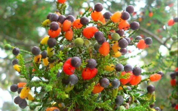 Wie sieht ein Baum  aus, auf dem 40 Obstsorten wachsen